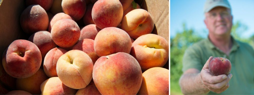 Tim holding peach